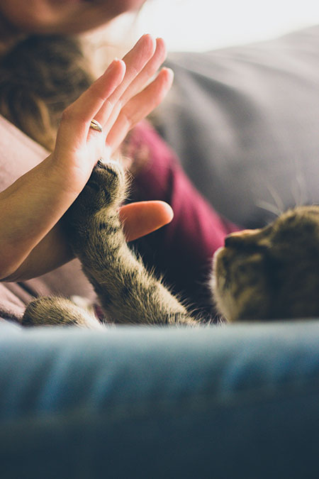 Cat and Human Owner Giving High Five
