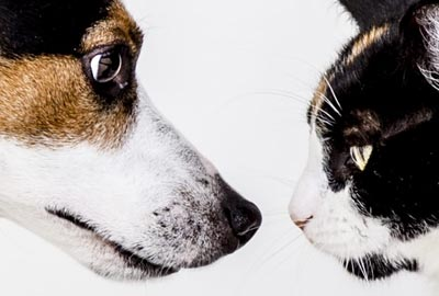 Photo of Dog and Cat Looking at Each Other